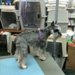 Photo of Lucy at Petite Paws Pet Parlor